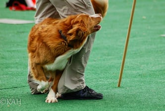 We believe that we can use our brains rather than our brawn to train our dogs, without pain or force being applied. We know that behavior that is rewarded will be repeated, and therefore we work to set ourselves and our dogs up to succeed.